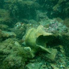 Roman amphora submerged in Portus Iulius