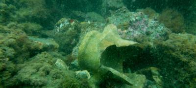 Amphora submergeg in Portu Iulius