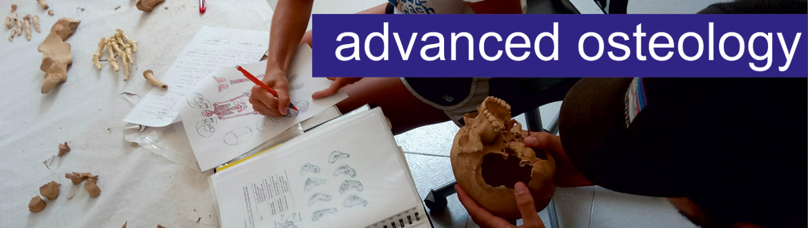 Advanced Osteology